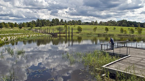 A photograph of someone looking out at the water at Sydney Park Wetlands